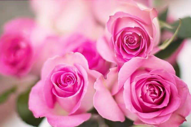 Love Is in Bloom at House of Flowers
